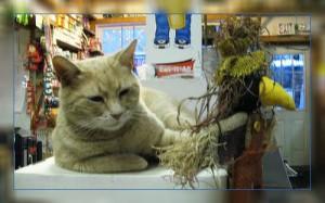 Фото. Американский мэр - кот по имени Стаббс