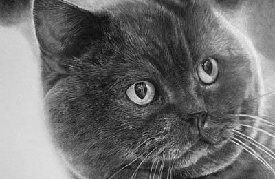 Фото. Кот нарисованный карандашом