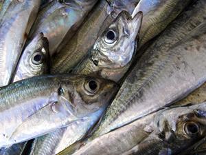Фото. Рыба - наше спасение