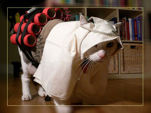 Фото. Кот-охотник