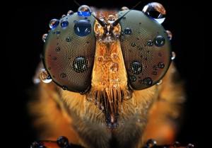 Фото. Глаза насекомых