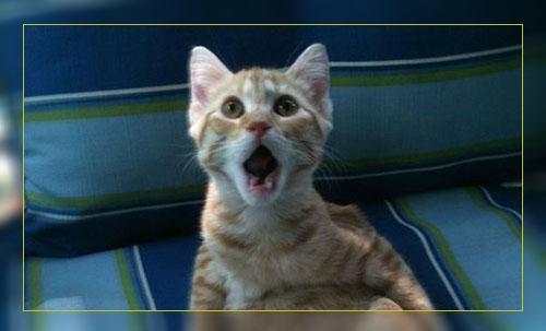 Фото. Эти удивительные коты или их ... ротики