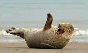 Фото. Смотри чтобы от смеха ласты не склеились как ...