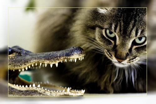 Фото. Кот и крокодил