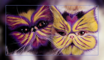 Фото. Красивые раскрашенные кошки
