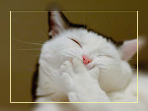 Фото. Смешной кот