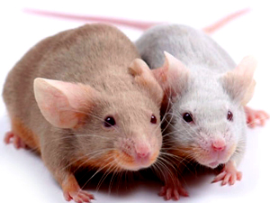 Фото. Мышки