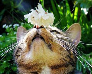 Фото. Кошкины вибриссы