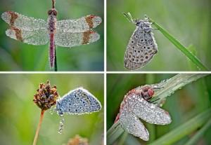 Фото. Драгоценный наряд для насекомых