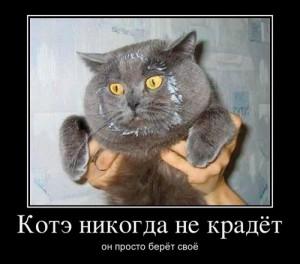 Фото. Кот-воришка