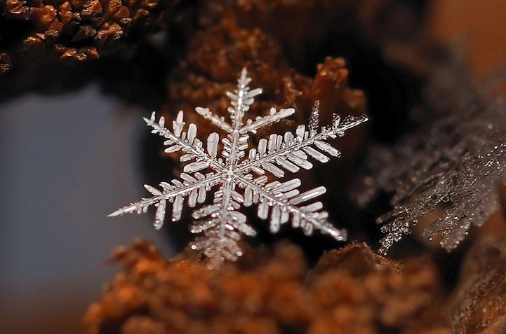 Фото. Красивая снежинка
