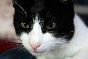 Фото. Кот по имени Мерлин