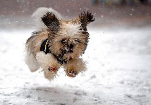 Фото. Собака в снегу
