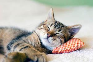 Фото. Кошка спит