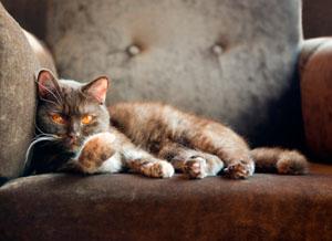Фото. Прикольные коты