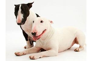 Фото. Агрессивные собаки