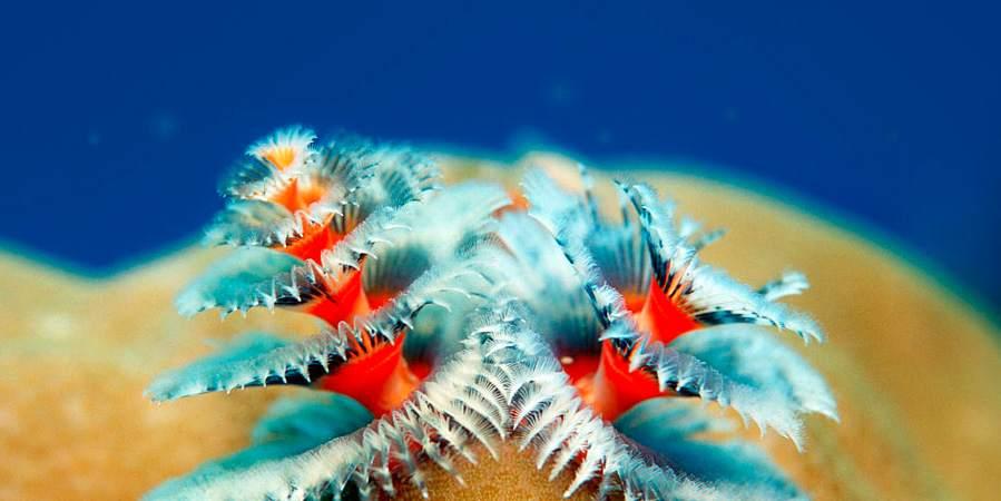 Фото. Морские чудовища
