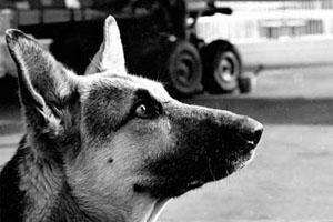 Фото. Верный пес