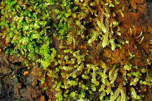 Фото. Древний мох