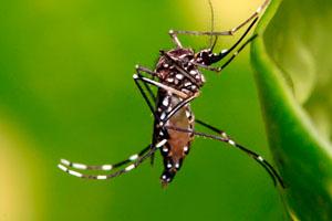 Фото. Притягивает комаров