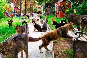 Фото. Рай для котов
