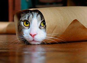 Фото. Шаурма кот