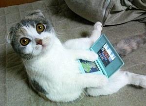 Фото. Прикольный кот