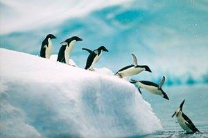 Фото. Пингвины в Антарктиде