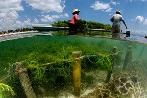 Фото. Выращивание водорослей