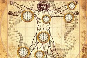 Фото. Биологические часы