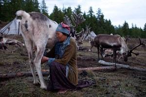 Фото. Оленье молоко