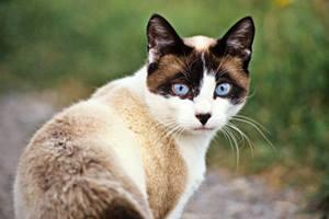 Фото. Домашняя кошка