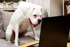 Собака изучает на экране лица людей
