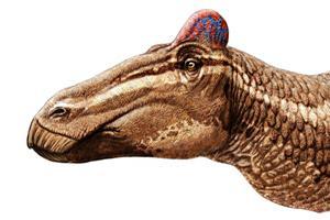 Фото. Утконосый динозавр