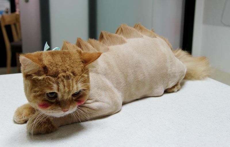 Кот пострижен под динозавра