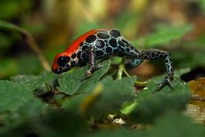 Черные и красные пятна на лягушке