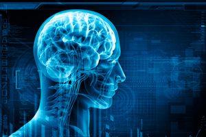 Фото. Синеватое изображение мозга человека