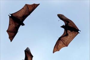 Фото. Три летучих мыши высоко в небе