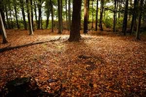 Красивая осень с опавшими листьями в лесу