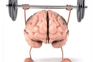 Фото. Большой и здоровый мозг