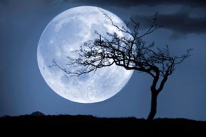 Фото. Дерево на фоне Луны