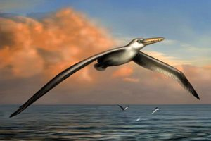 Крупнейшая птица в мире