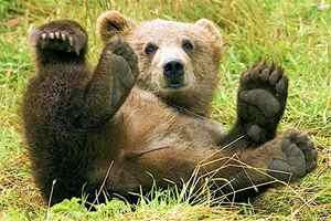 жизнь медвежат на первом году их жизни