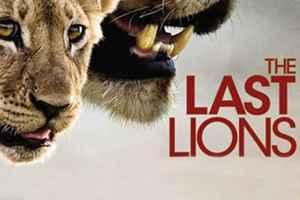 фильм о жизни львов