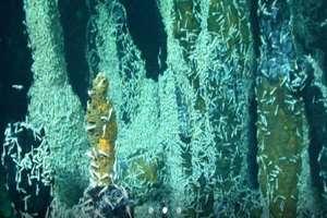 поиск жизни под водой