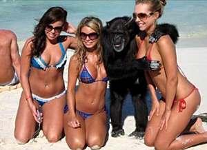 девочки зажигают с обезьяной