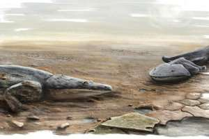большая саламандра