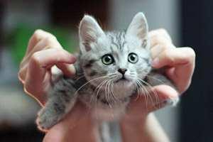 парящая кошка