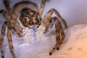 фобия боязни пауков
