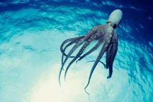 осьминоги реагируют на свет
